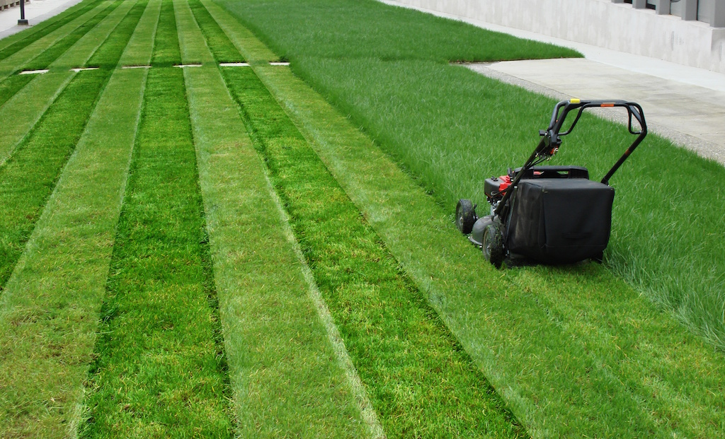 The grass professionals leading landscape and lawn for Home and garden maintenance services